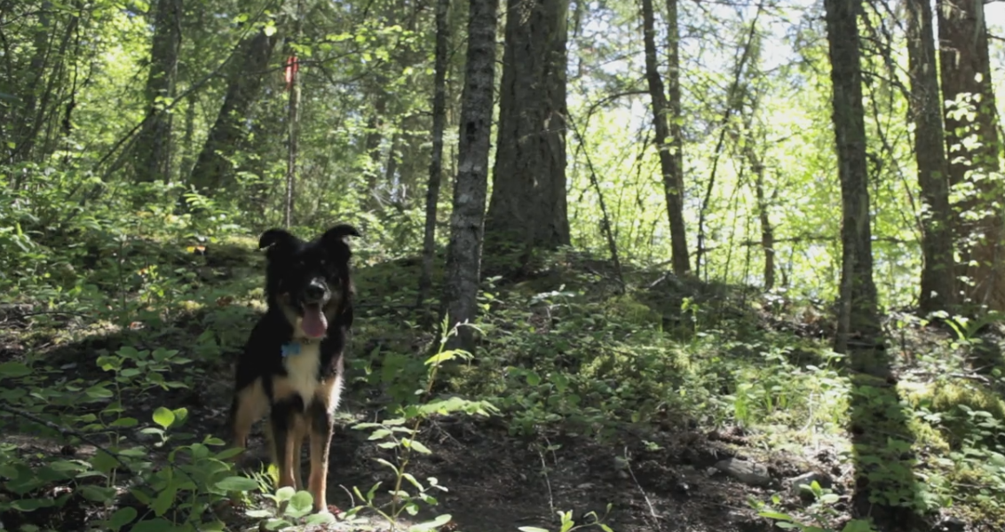 Video: Cruise Hounds Axel & Oscar Trail Dogs