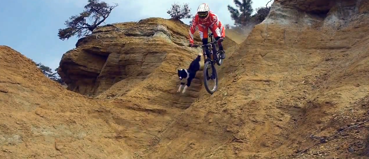 MTB Downhill Dog