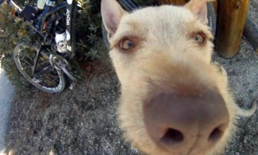 Video: Timber Trail Dog
