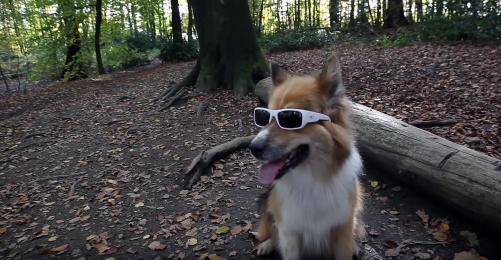 Video: Rusty Fastest Trail Dog in Town