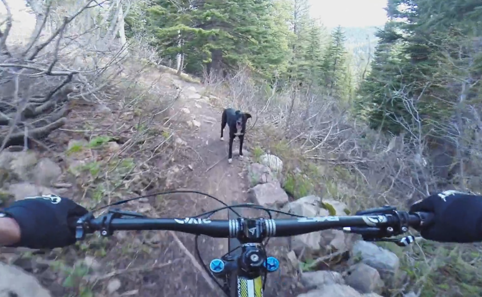Video: Tucker the Dog Lithium Trail Jackson, WY