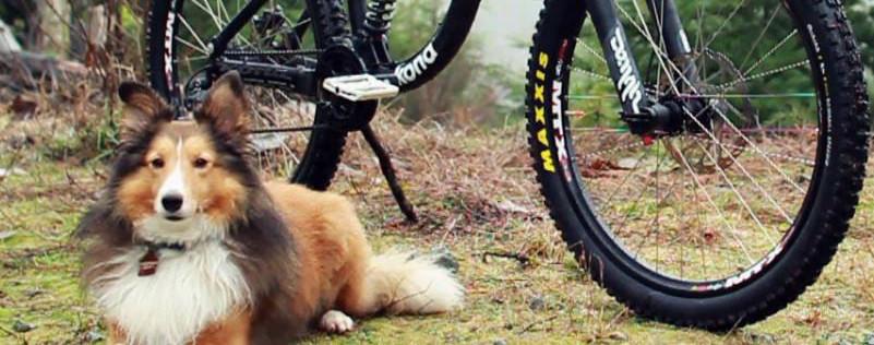 Timmy Mountain Bike Dog
