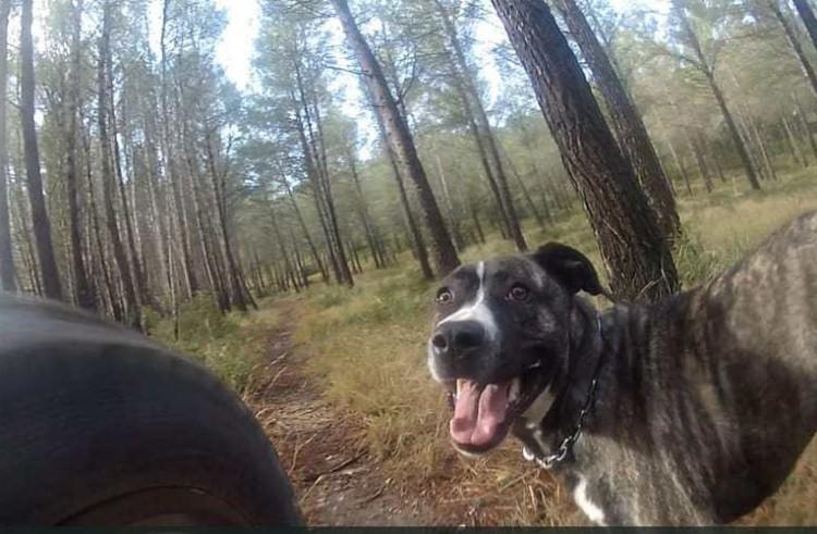 Single Track Trail Dog Kailan