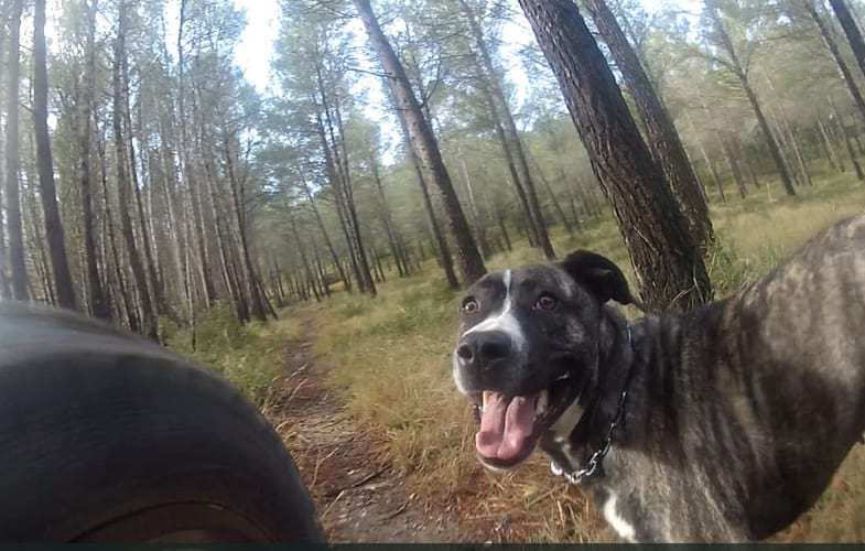 Video: Single Track Trail Dog Kailan