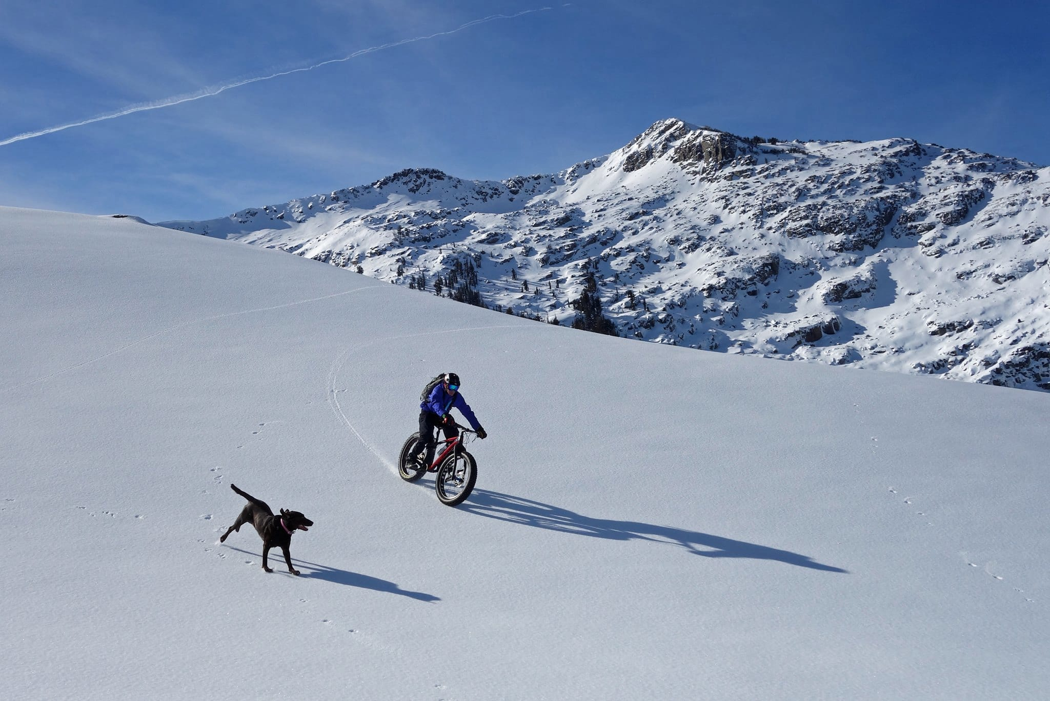 Fat Bike Trail Dog First Tracks Productions