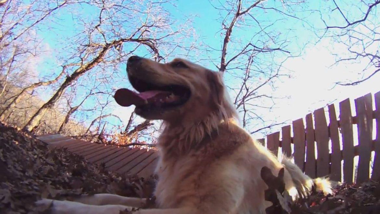 Shoreline Trail Dog Ride Kaysville, Utah, Shoreline Trail