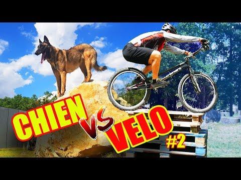 Trials Bike Trail Dog Challenge Aurelien Fontenoy