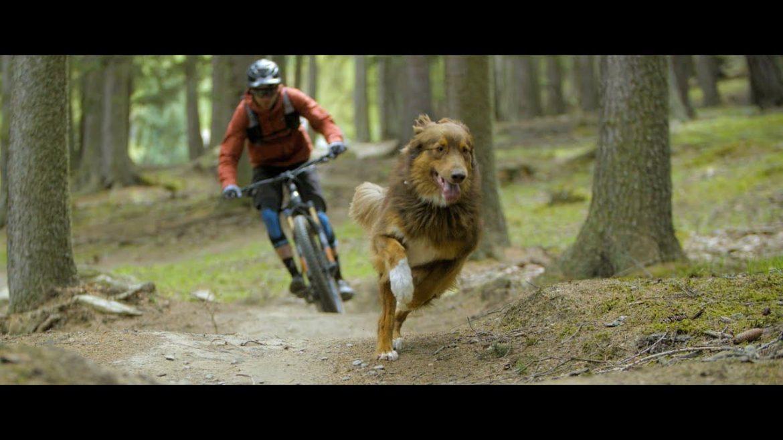 Paws & Wheels Australian Shepherd Trail Dog Balu